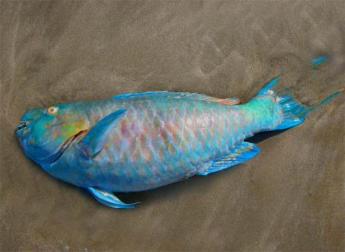 fishfish1