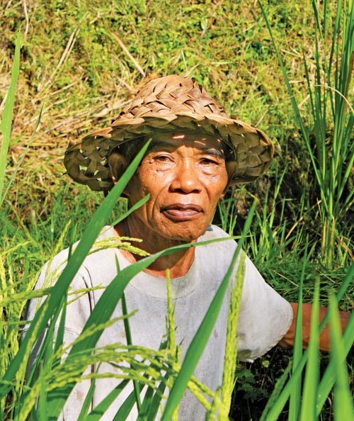 Rice Farmer 01 copy